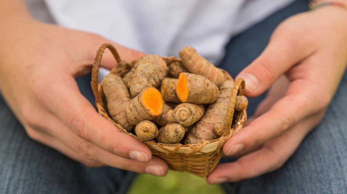 The Many Health Benefits of Turmeric