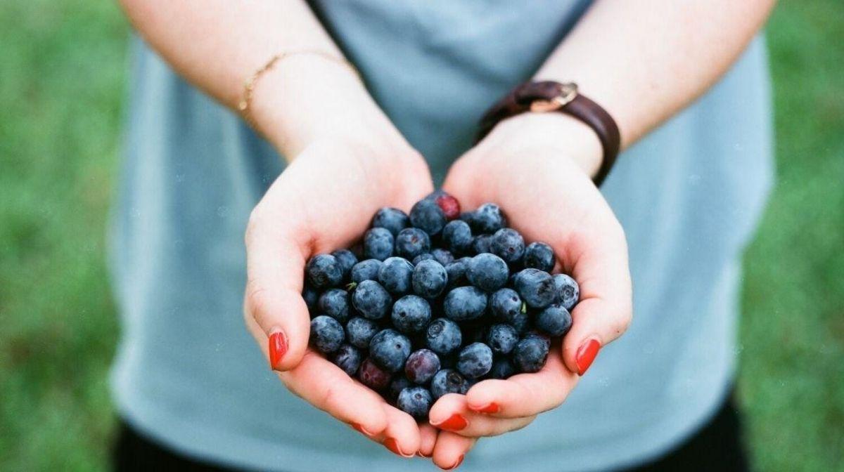 Действительно ли органические продукты более полезные?