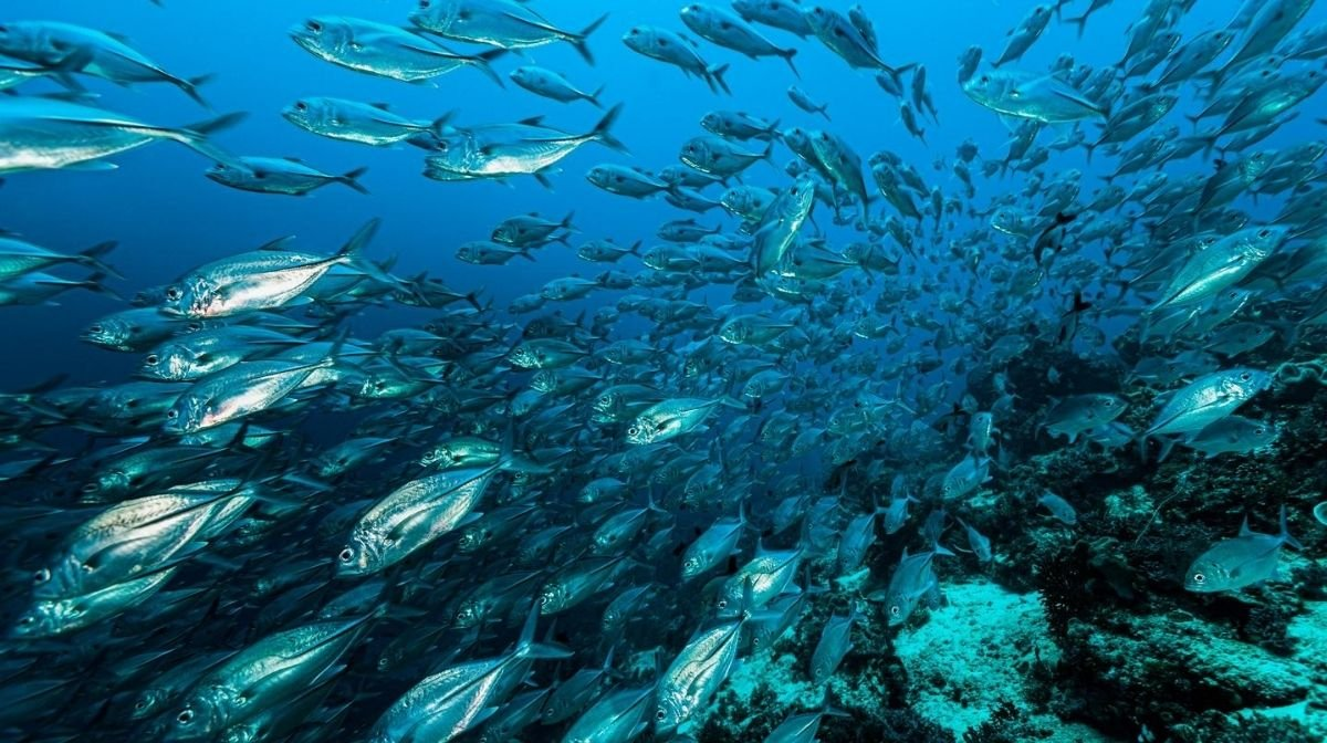 small species of fish, which are less likely to be contaminated by toxins