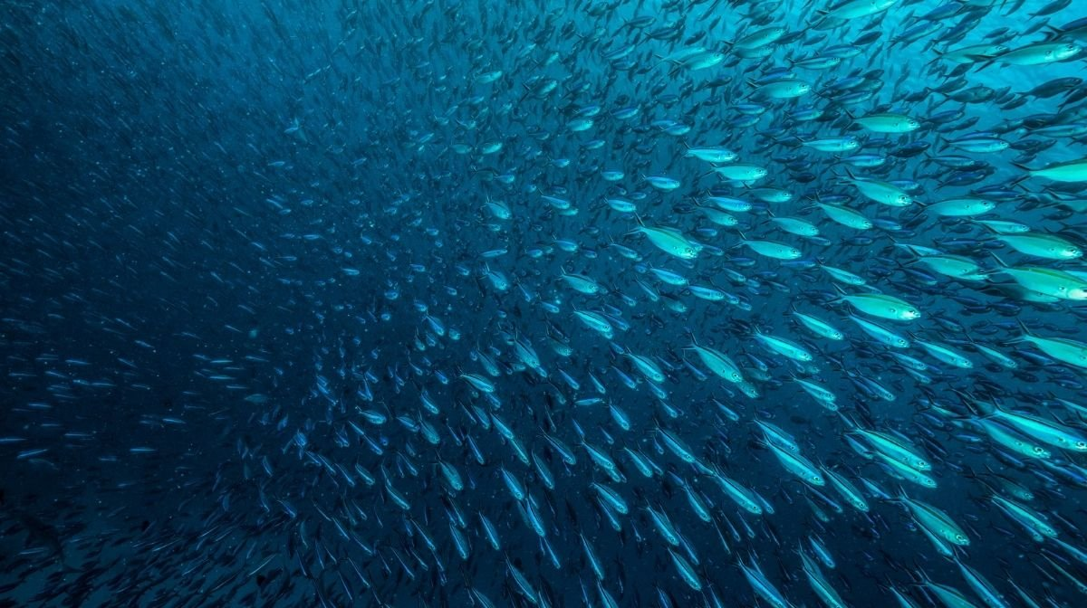 From Sea to Supplement: The Journey of Our Fish Oil