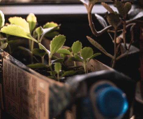 What is Upcycling? | From Trash to Treasure