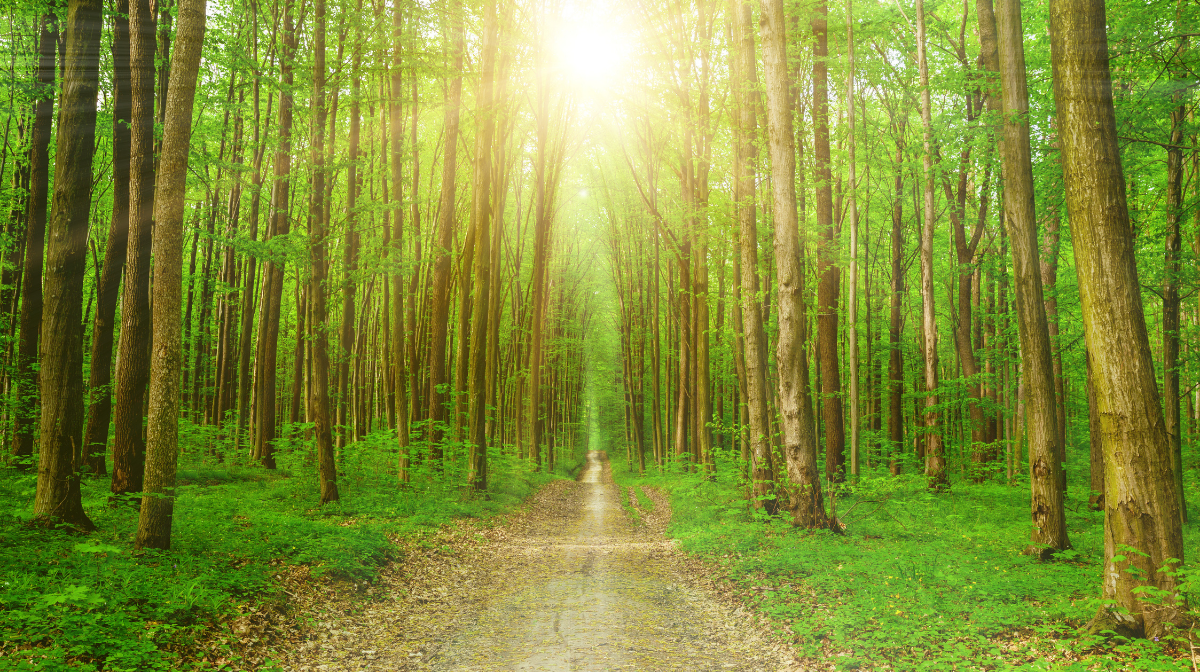 CarbonNeutral® Certified Customer Deliveries  | What This Means