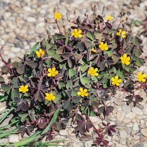 control weeds 300x300 image