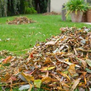 make leaf mould 300x300 image
