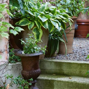 plant up pots and containers 300x300 image