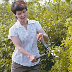 prune your plants 300x300 image