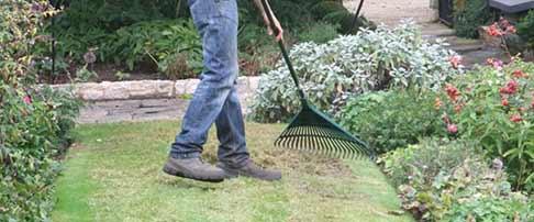 Expert lawn blog - February