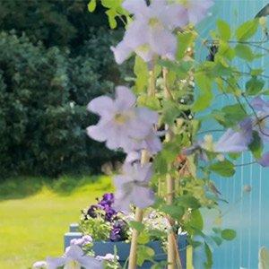 Create a colour scheme for your garden