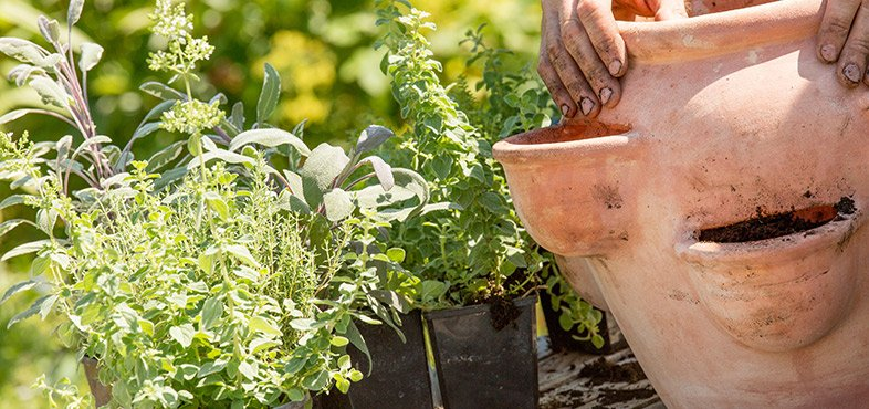 Step 3 plant your herbs the right way