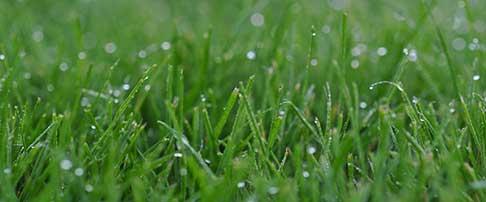 Lawn blog - July