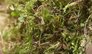 Scarify your lawn to remove moss & thatch