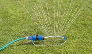 Water your lawn if it needs it