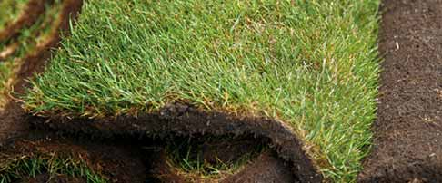 How to create a new lawn from turf
