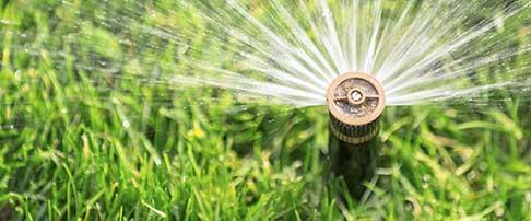 Lawn care blog - June