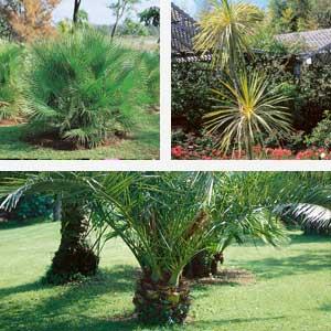 Plant festival - June - Palms