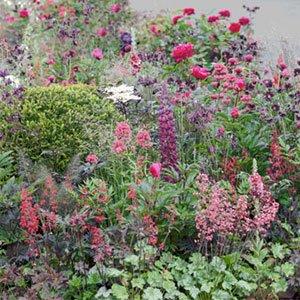 cottage garden 300x300 image