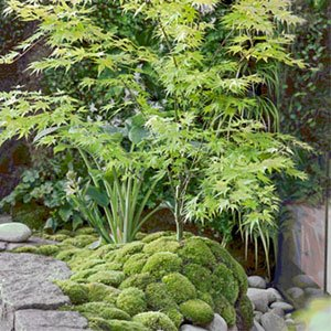 japanese garden 300x300 image