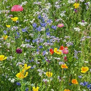 wildflower garden 300x300 image