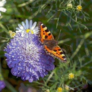 wildlife garden 300x300 image