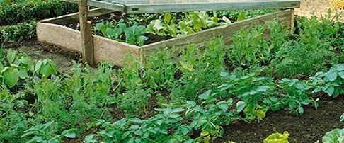 How to plan & design an edible garden