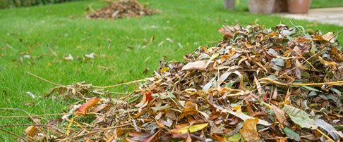 How to maintain your lawn in winter