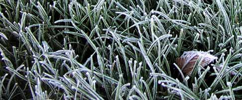 How to care for your lawn in winter