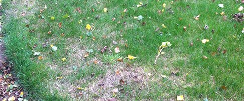 October expert lawn advice