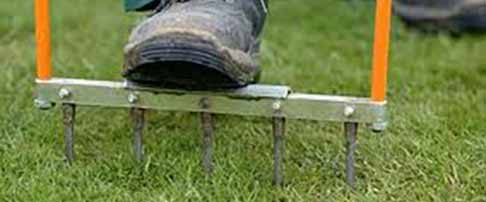 Expert lawn advice in March