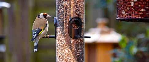 How to feed garden birds