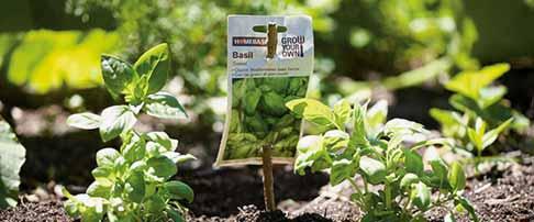 How to grow hrebs