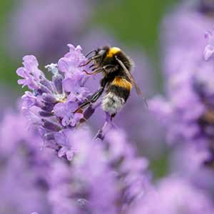Think about what you need to make a wildlife friendly garden