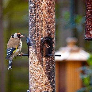 Bring birds into your garden