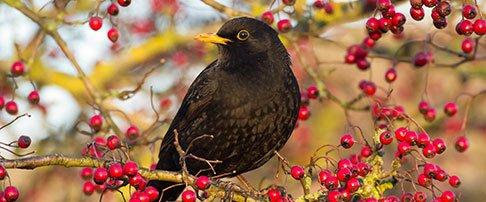 How to care for garden birds in autumn