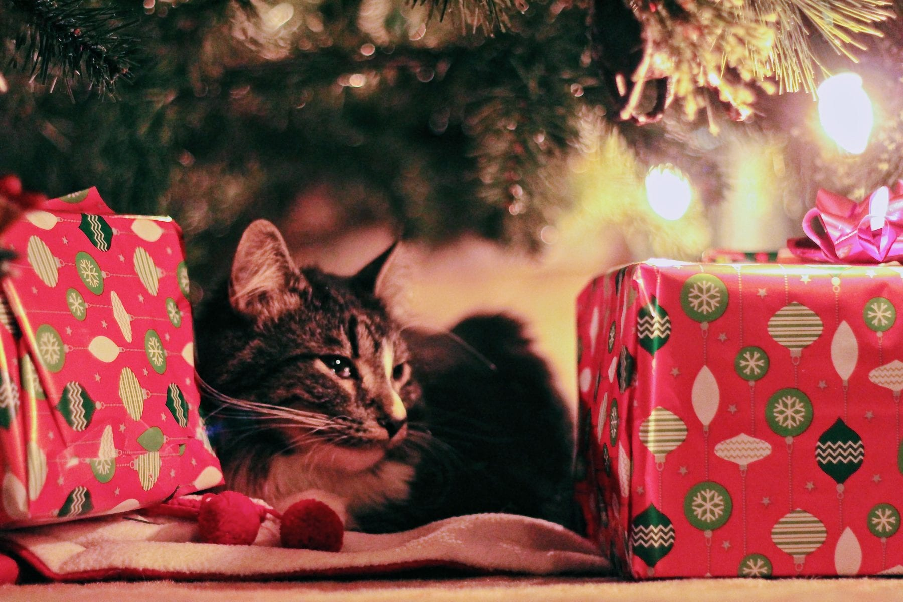 Cat with wrapping paper