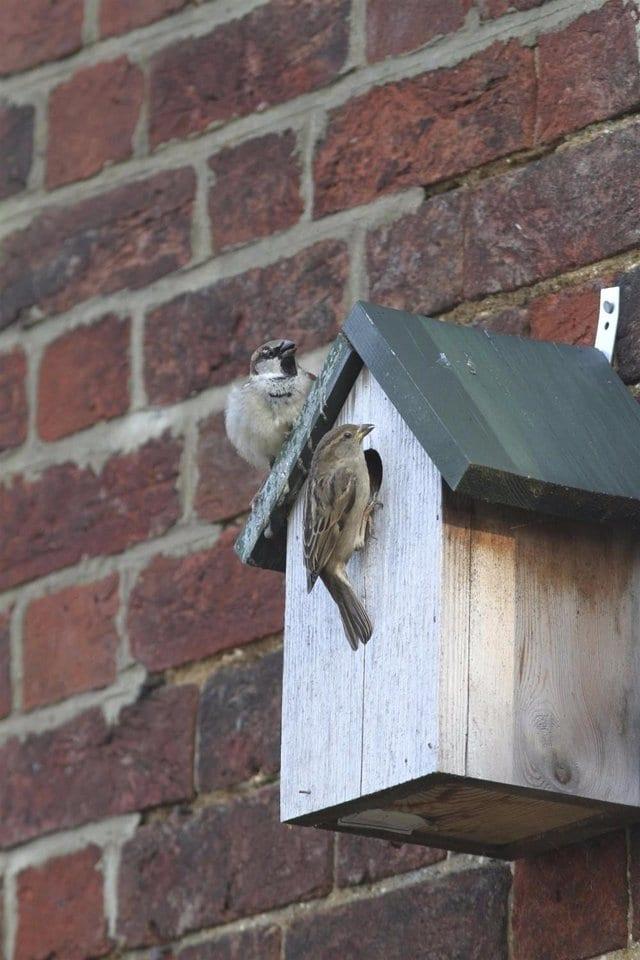Birds on bird house