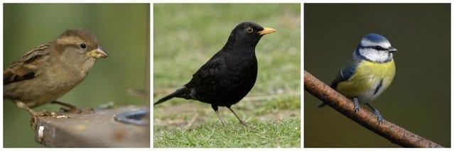 Different bird species