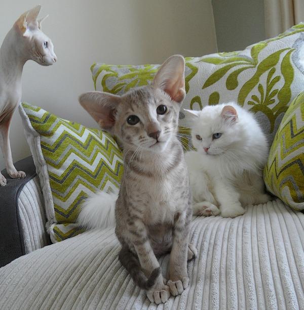 Pupdate Cats: Sharon and Bianca