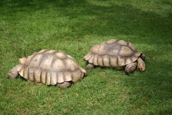 Tortoise Breed List and Care Guide