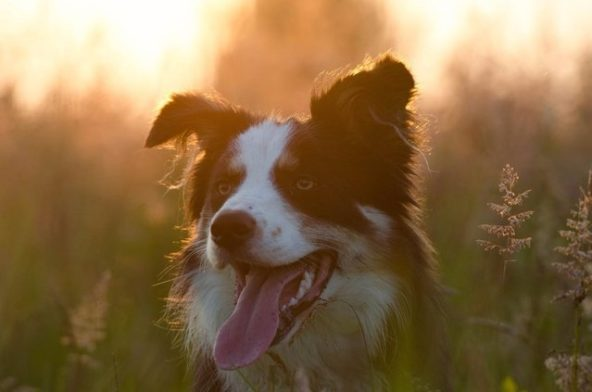 Caring for Dogs in Hot Weather