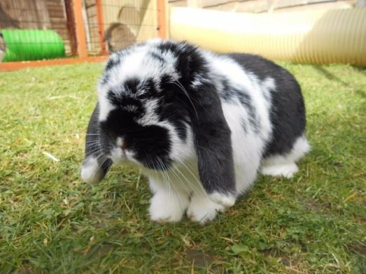 Rehoming Rabbits: What You Should Know