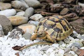 Buying and Caring For a Tortoise