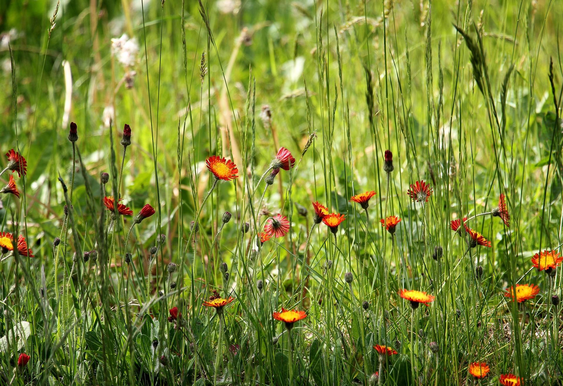 5. wildflower