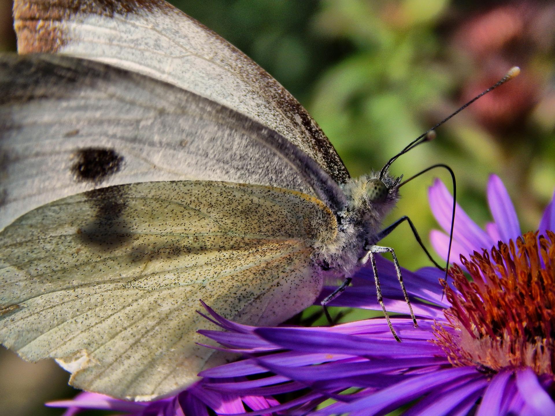 butterfly-454130_1920
