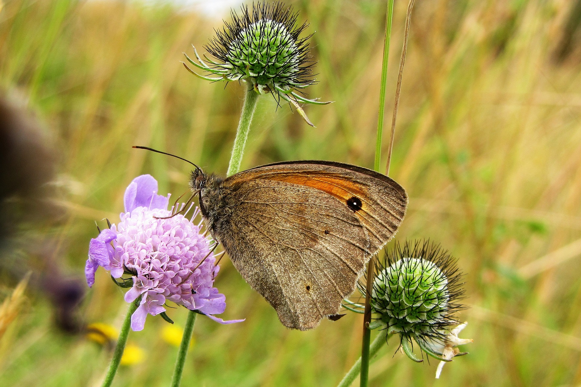 How to Attract Butterflies to Your Garden - Preloved UK