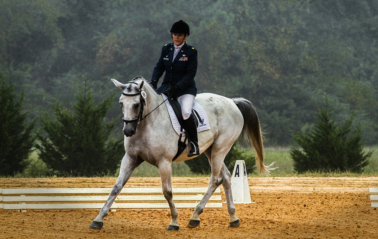 horse-573770_1280