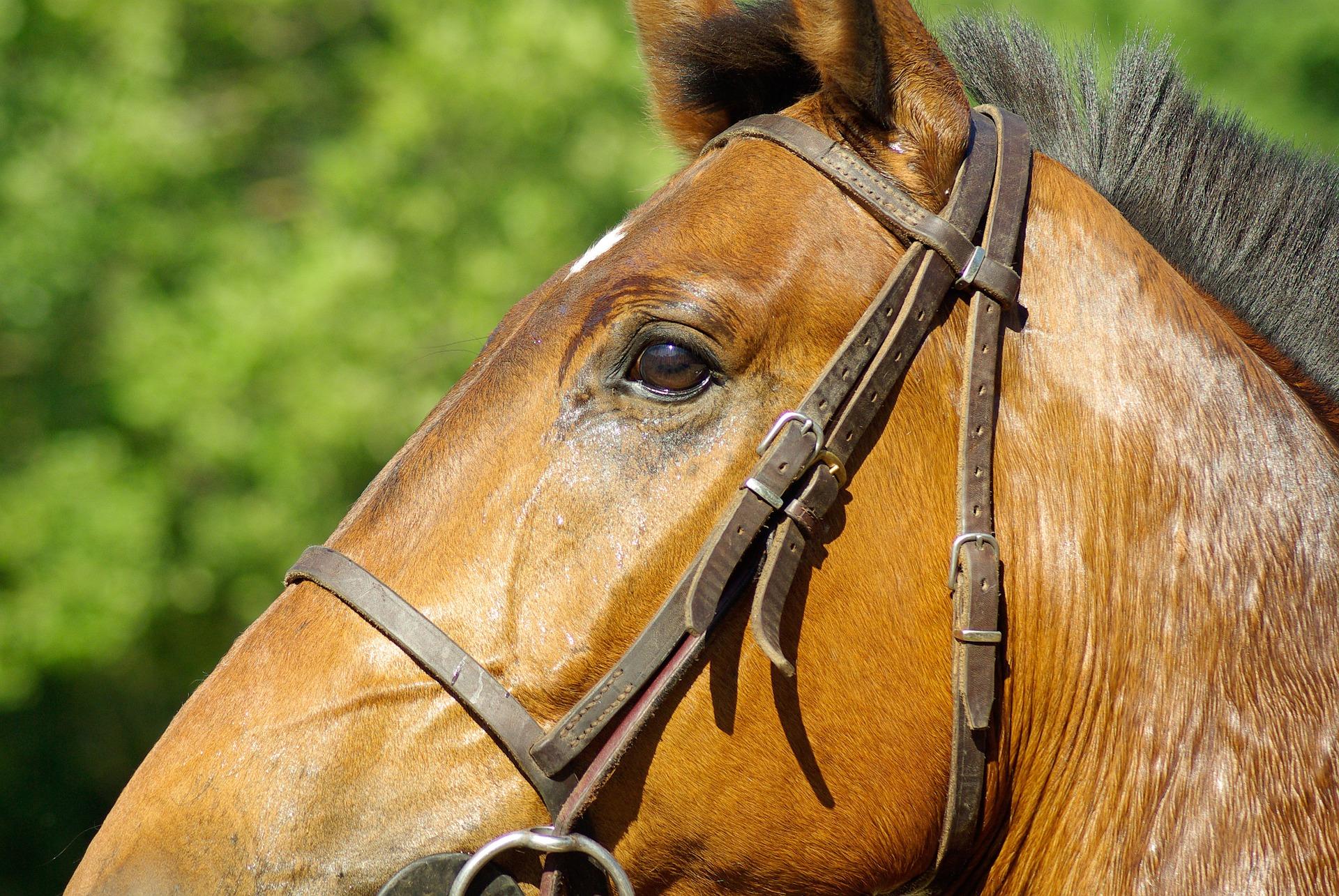 horse-800851_1920