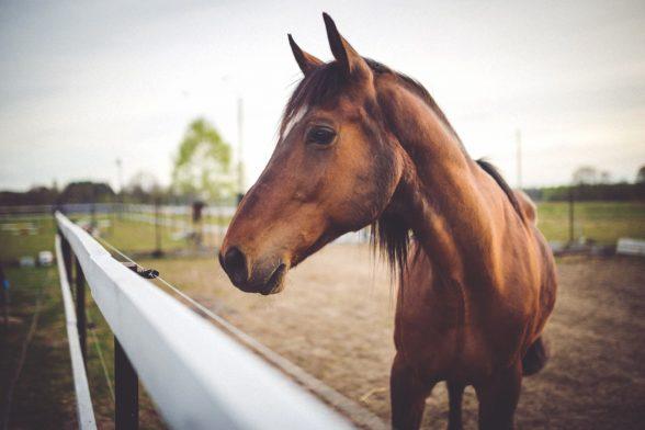 Understanding Your Horse's Body Language