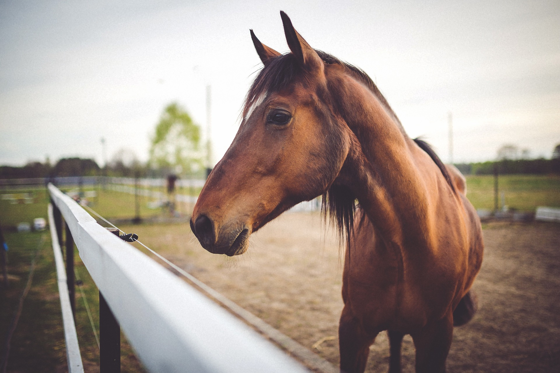 Understanding Your Horse's Body Language