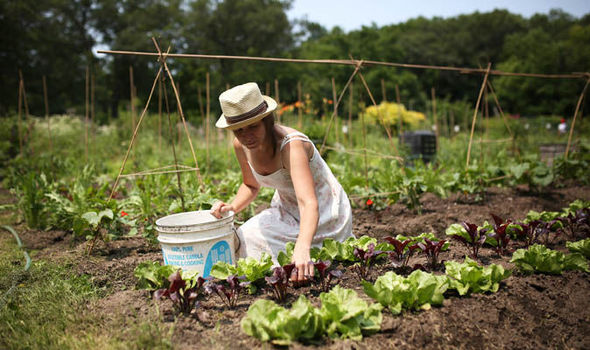 A History of Allotments. The Grow-Your-Own Revolution