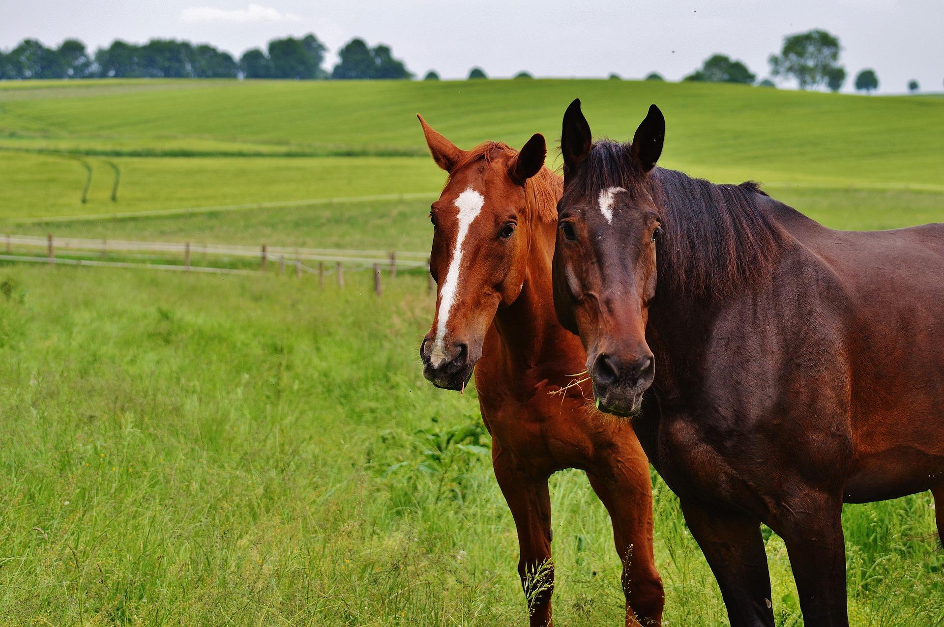 horses-1617962_1920